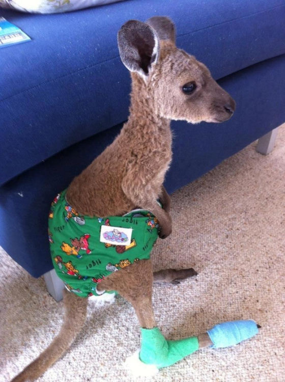I was gonna try and tie this picture in to the review, but it is a god damn baby kangaroo. Joey so hard.