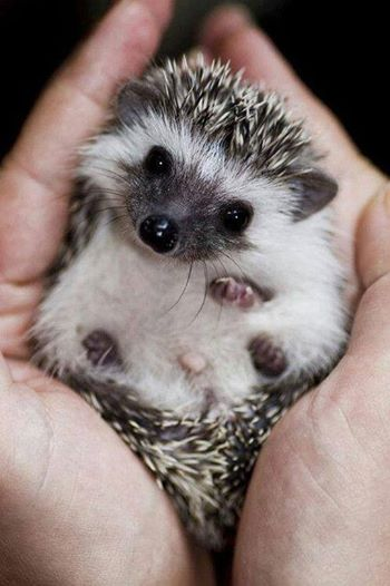 Every time you post a photo of a barleywine, a brewer stomps on a baby hedgehog.  Post wisely.