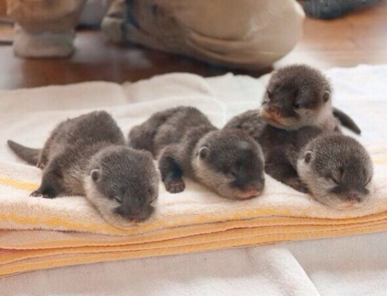 you could complain about shit, or you can look at this pic of baby otters. choice is yours.
